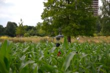 There is only camera tower visible, the rest of the robot is hopelessly lost in the green maize.
